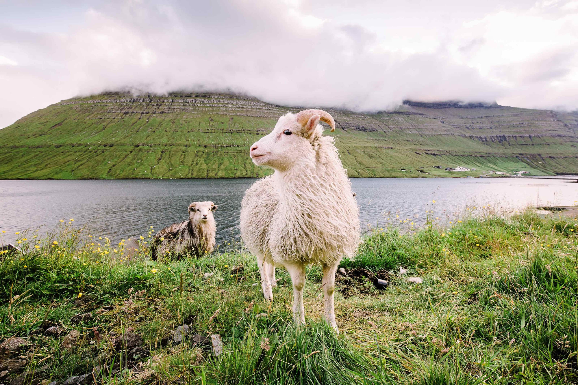 Two sheep standing on a grassy riverbank across from a cloudy mountain