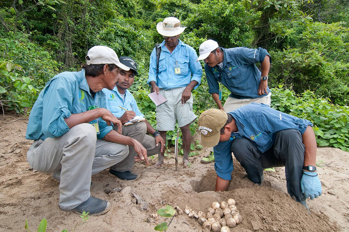 Turtle Rangers from Paso Pacifico investigate a nest of turtle eggs