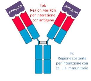 farmaci biologici e struttura anticorpo