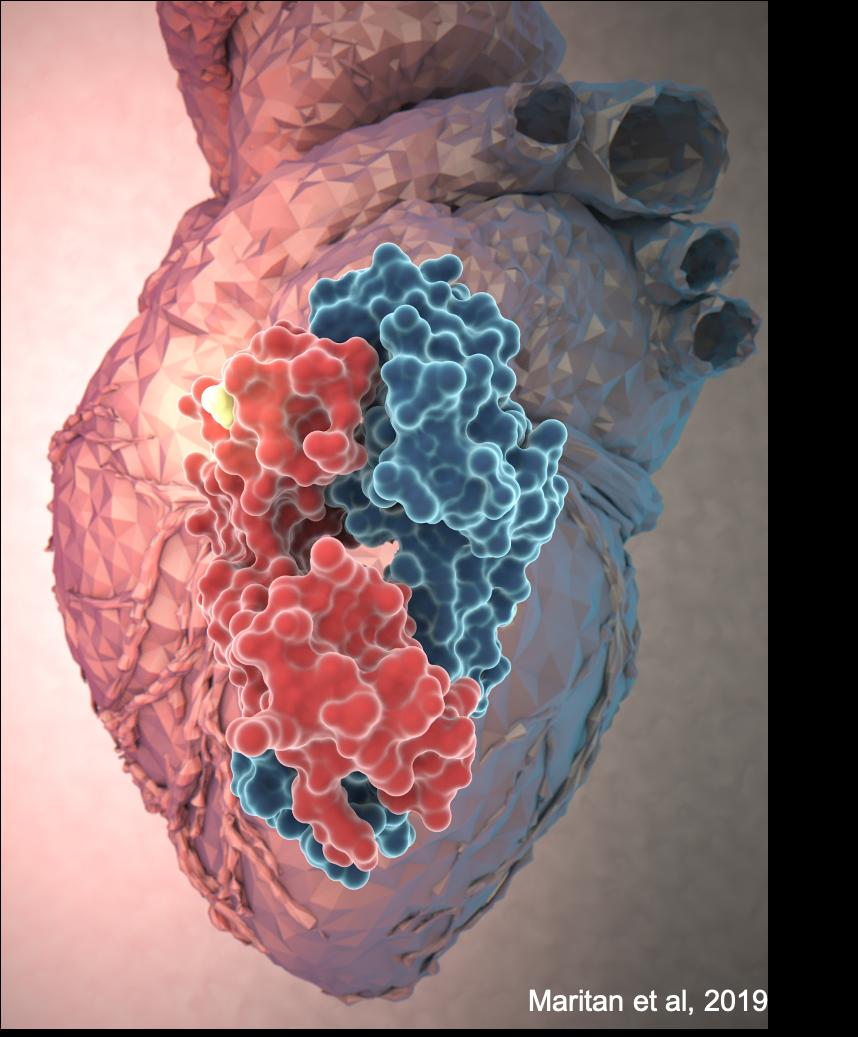 depositi di amiloidi nel cuore