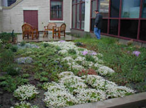 Green Roof example