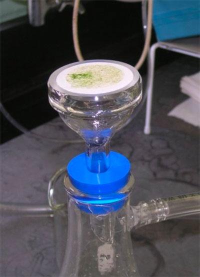 sample chlorophyll filtration