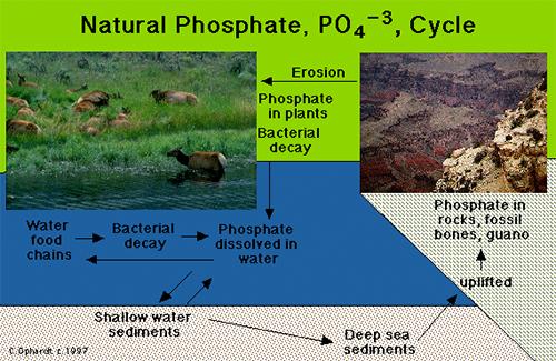 Natural Phosphate Cycle