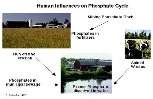 Human Influenced on Phosphate Cycle