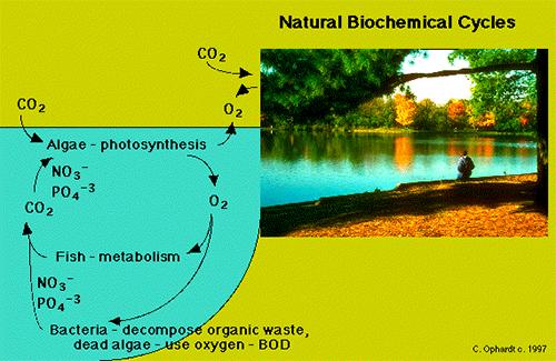 Natural Biochemical Cycles