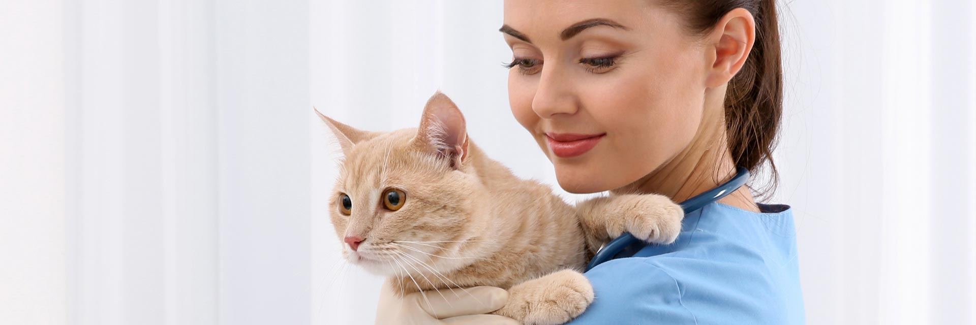 cat care, preventative cat care, vet visits, healthy cat, routine vet check-up