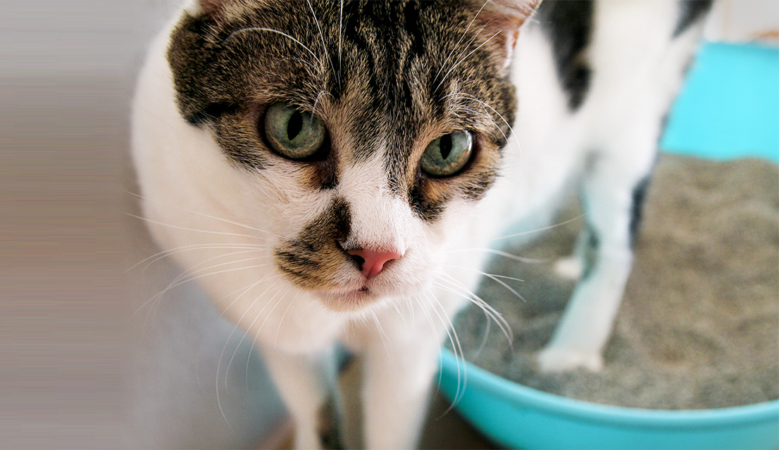 Why Is Your Cat Urinating or Pooping Outside the Litter Box & What Can You  Do About It?
