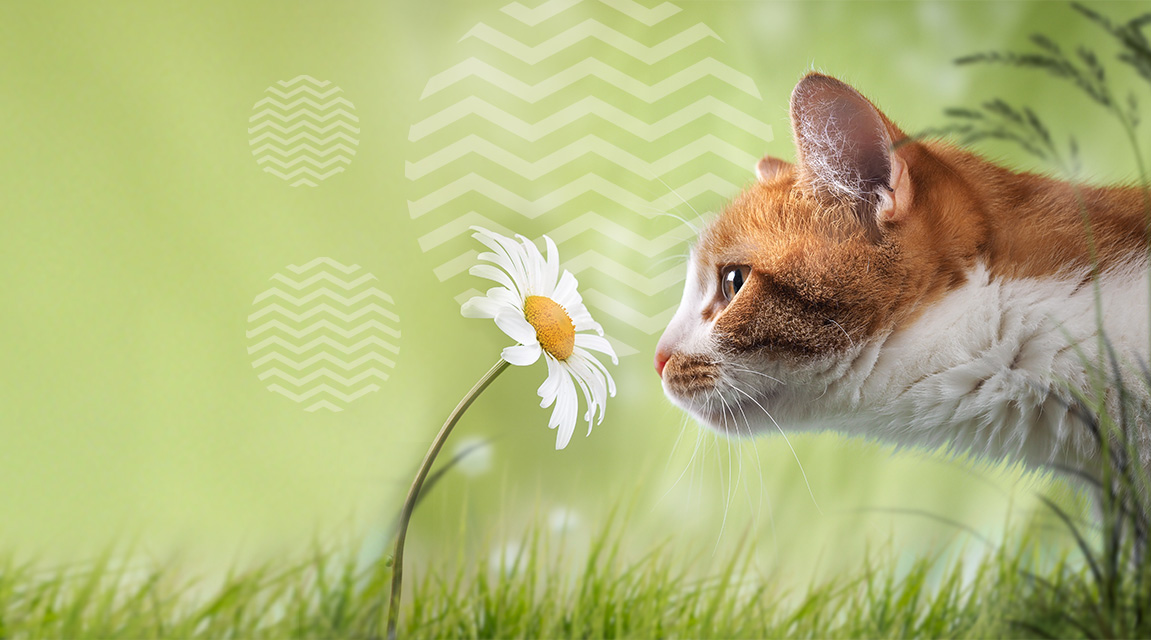 spring cleaning; green cleaning products; green ways to clean for a cat owner, cat-safe cleaning products