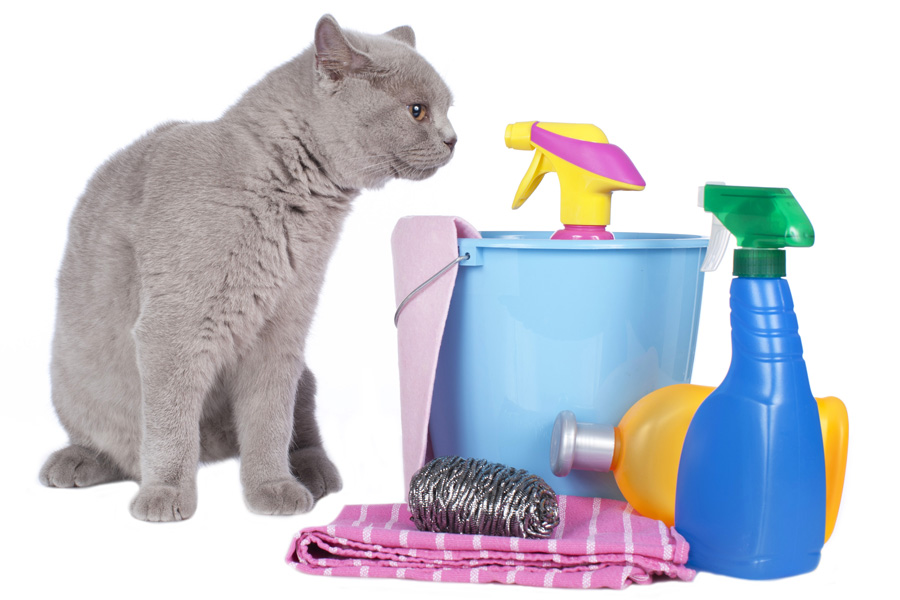 Cat with eco-friendly cleaning supplies