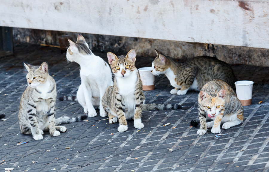 stray cats on the street, why you should spay or neuter your cat