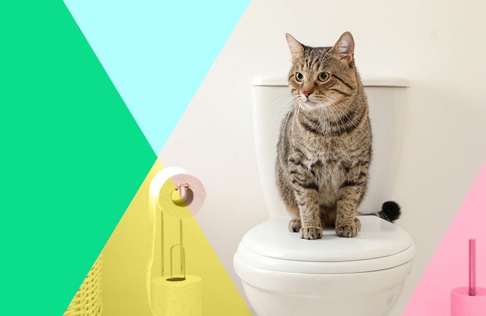 flushable litter, composting cat litter, should you flush cat litter, eco-friendly ways to dispose of cat waste