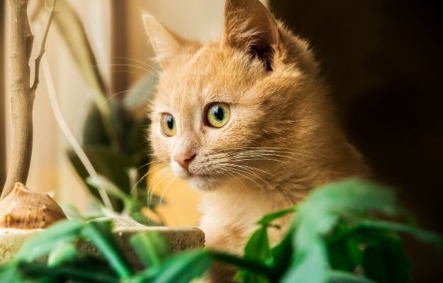 Fluffy kitten sits on a windowsill with pots of plants, comfort to a homeless animal | Plants | 9 Tips To Cat-Proof Your Home For A Safe And Happy Cat