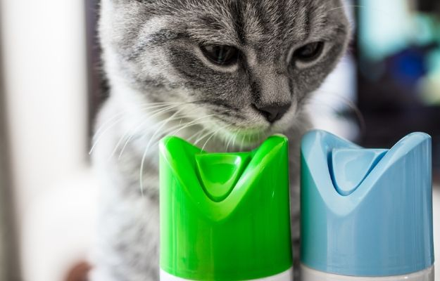 Cat is sniffing cylinder of air freshener | Chemicals | 9 Tips To Cat-Proof Your Home For A Safe And Happy Cat