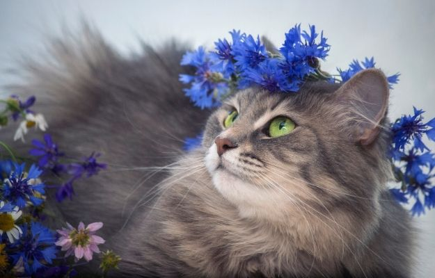 Cat and yellow sunflowers on the window | Cornflower | The 14 Best Cat-Friendly Plants For Your Home