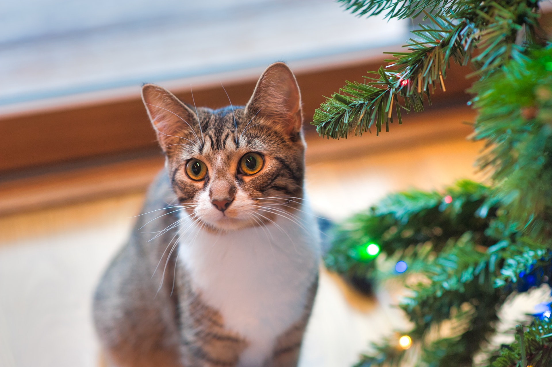 The holidays can be a stressful time for everyone, especially for conscientious shoppers. We've compiled a list of eco-friendly cat products that are sure to wow this holiday season.