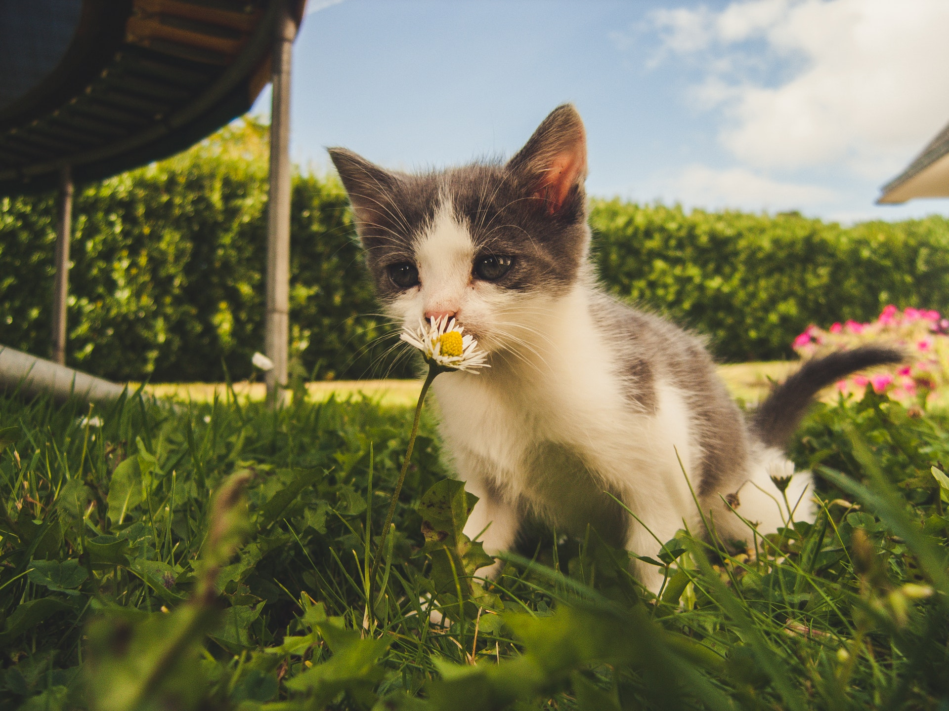 Kitten in grassy field | 10 Eco-Friendly Holiday Gift Ideas for Cat Lovers