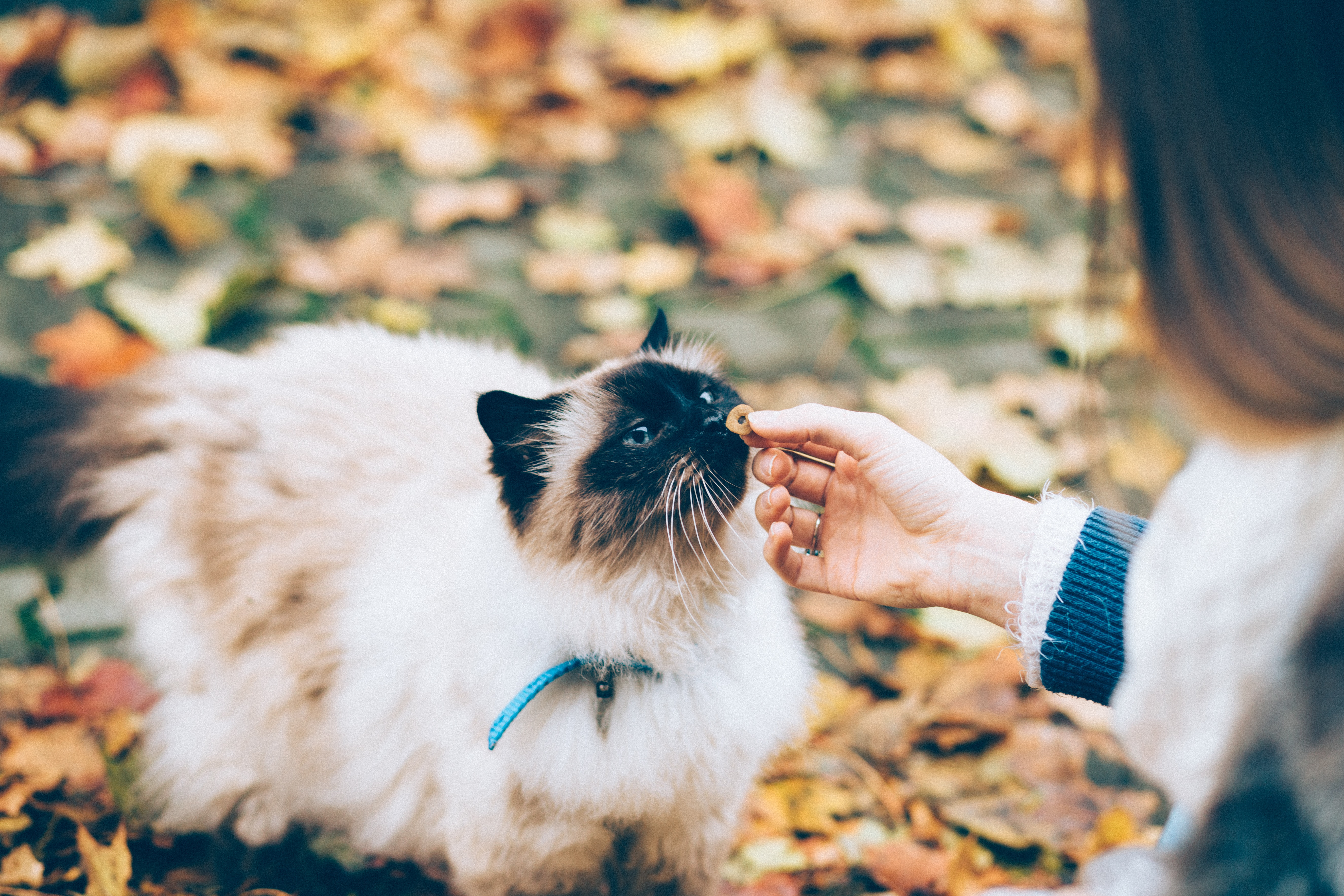 Woman feeding a cat a treat | 10 Eco-Friendly Holiday Gift Ideas for Cat Lovers