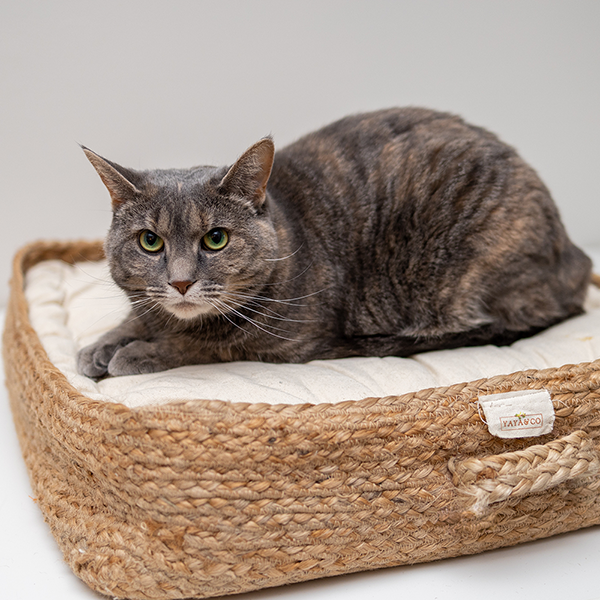 Cat lying on cat bed | How to Introduce Your Foster Kitten to Your Home