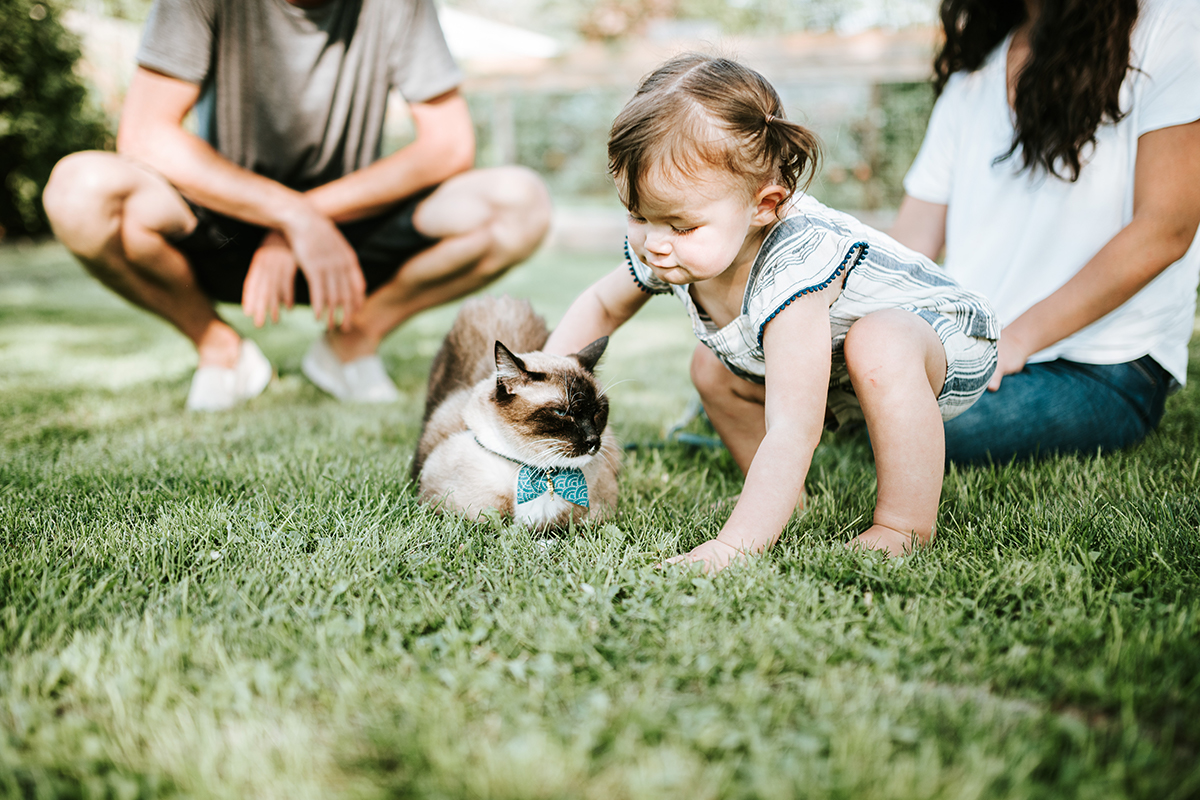 Toddler petting a Siamese cat | How to Introduce Your Foster Kitten to Your Home