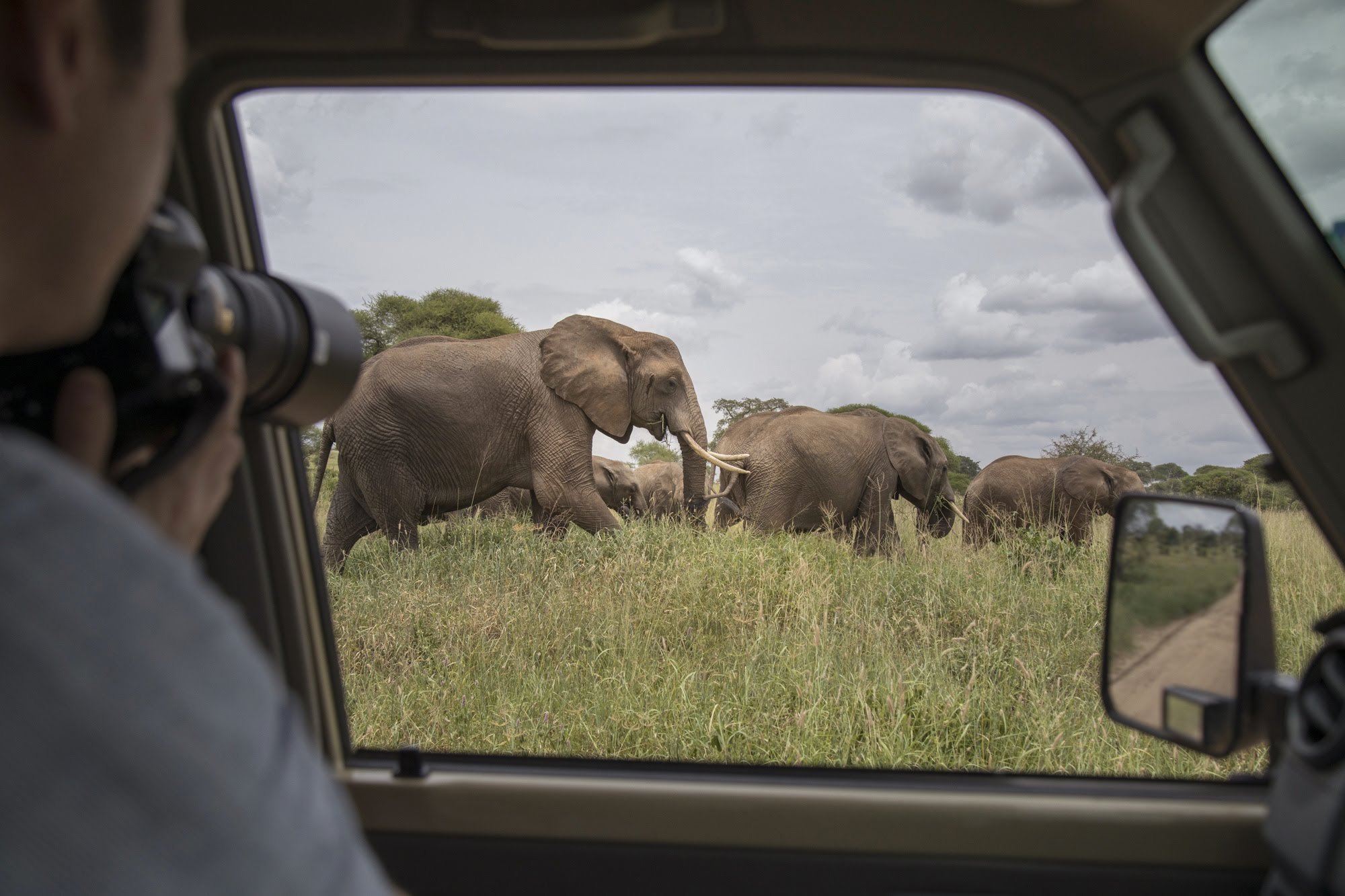A traveller photographing a herd elephants from a Safari Drive Land Cruiser