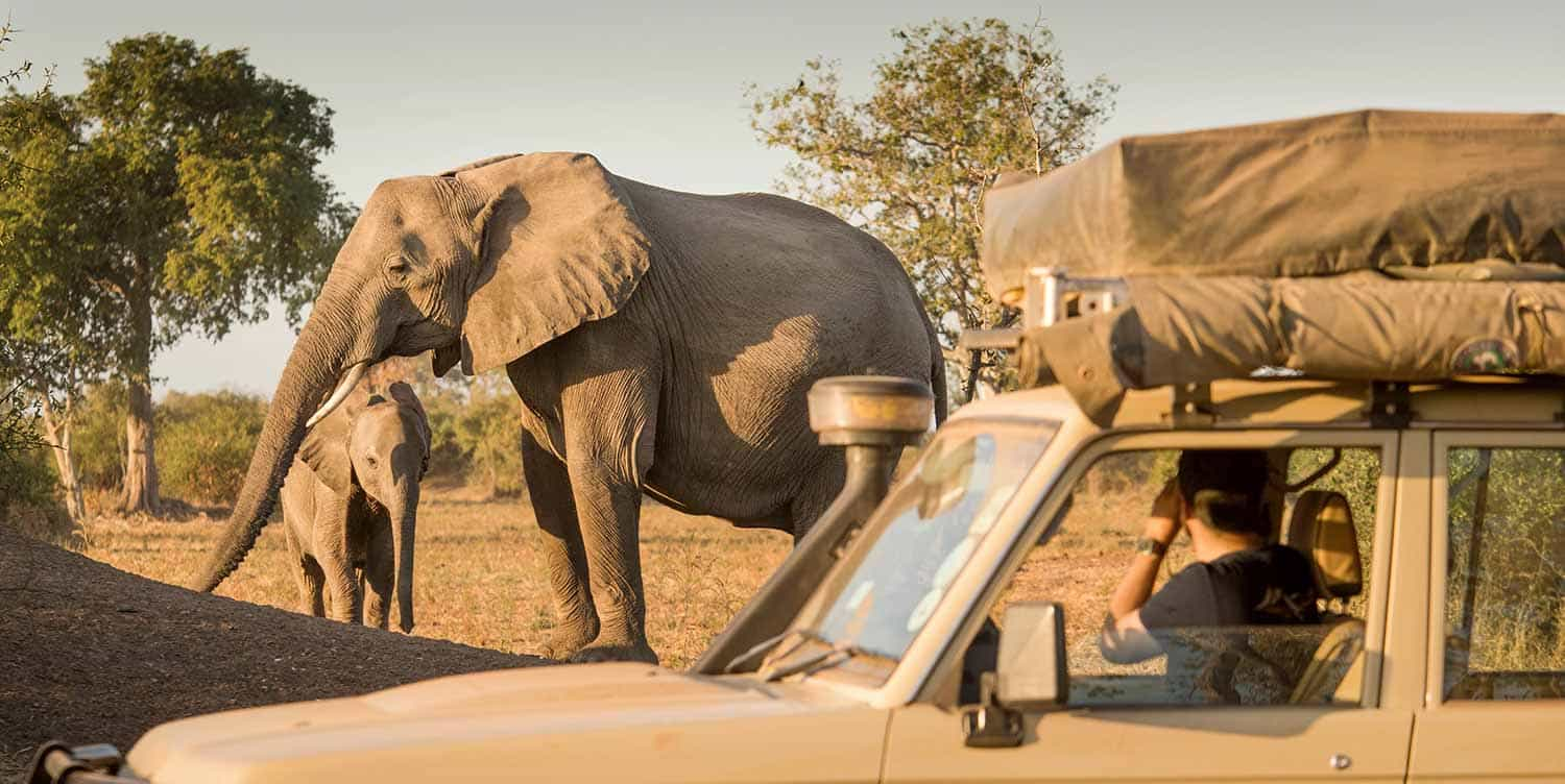 An elephant being photographed from a Safari Drive Land Cruiser