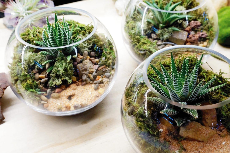 Terrarium Laboratory DIY terrarium kit