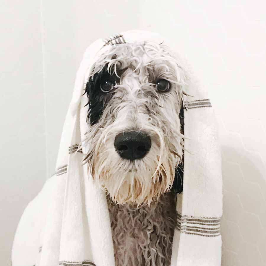 The Best Dog Shampoo for a Clean Canine
