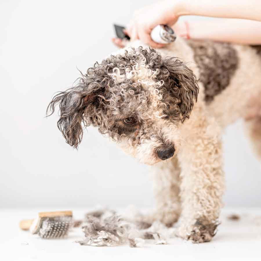 The Best Dog Clippers for a Well-Cropped Canine