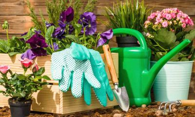 Essential gardening tools