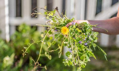 australian weeds