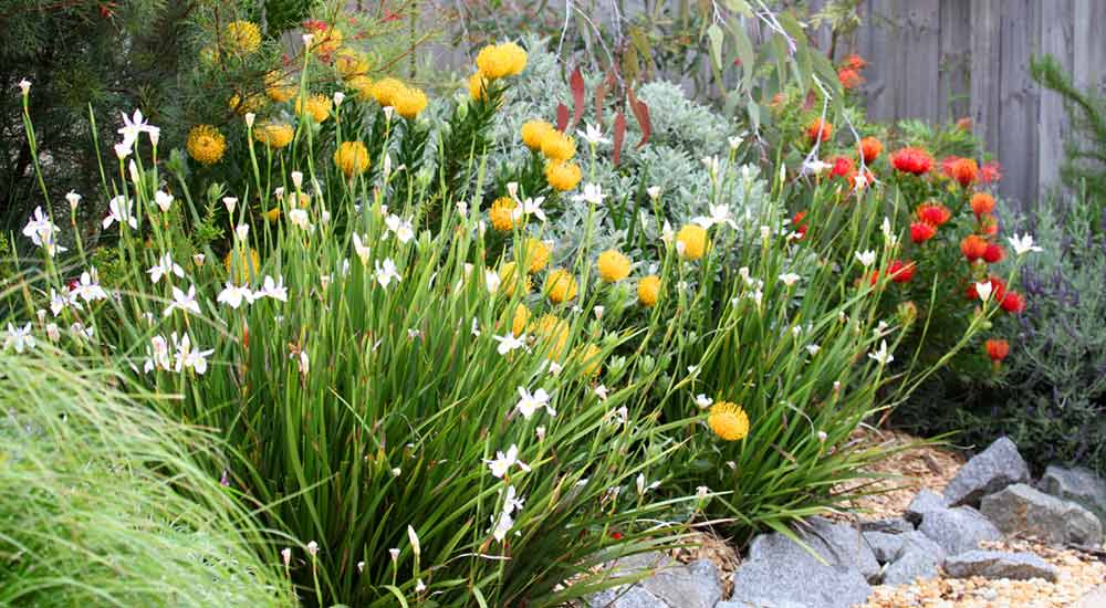 Native Plants For Your Landscaping Project All Green