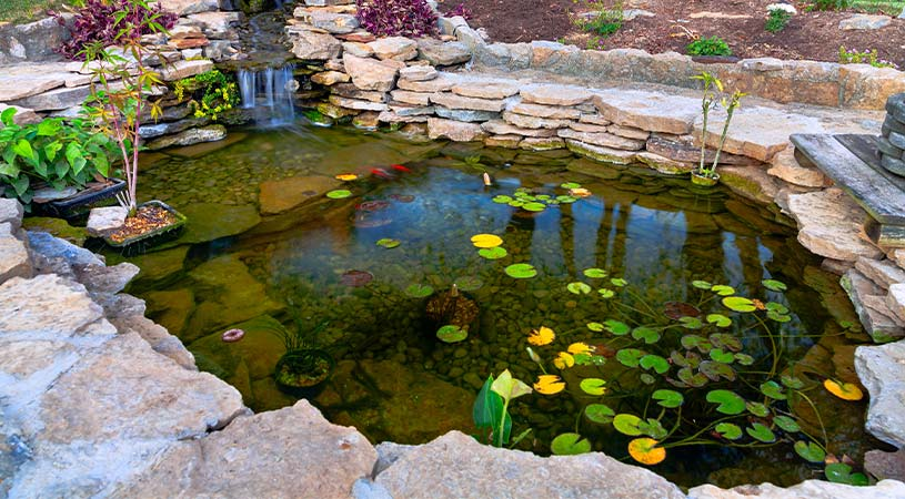 fish pond in backyard