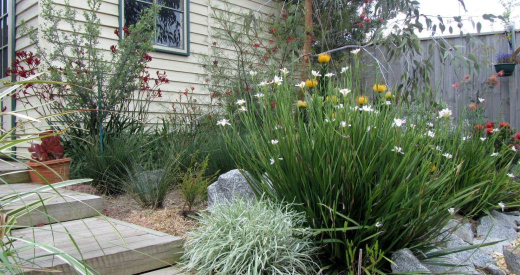 Council requirements for residential landscaping