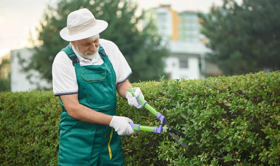 Best hedges to plant