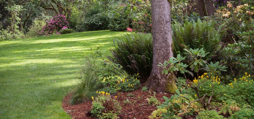plant shrubs and keep them looking great