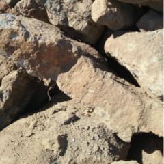 [Pebbles, Rocks and Gravel] Large Garden Rocks