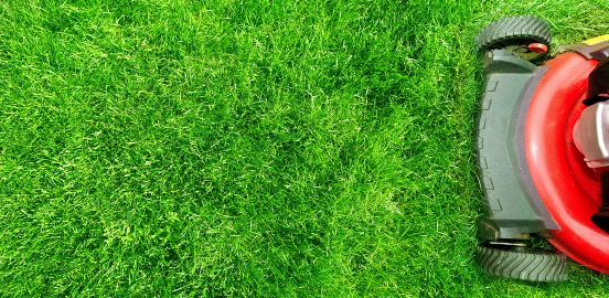 Lawn mower cutting healthy grass