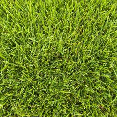 [Lawn Turfs] Sir Grange