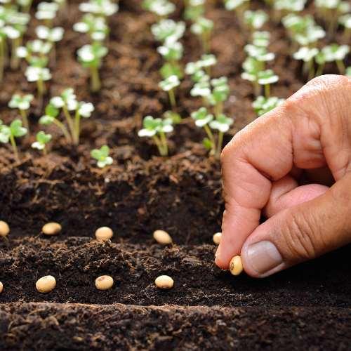[Plants] Seeds
