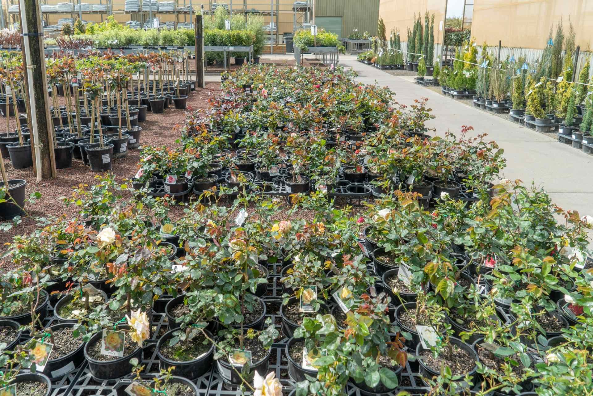 extensive range of native plants