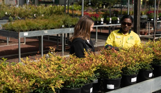 All Green team member advising a customer in front of plants