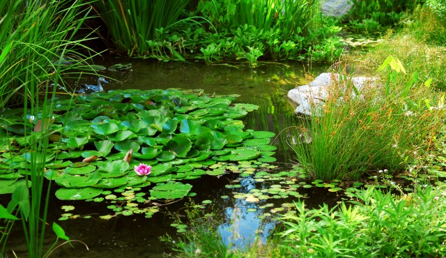 landscaped garden with water plants