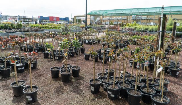 plants displayed in outdoor area of garden centre