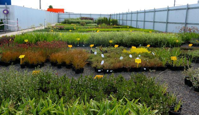 shrubs displayed in outdoor area of garden centre