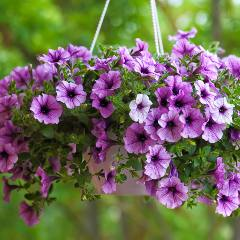 [Garden Ornaments] Hanging Baskets & Pots