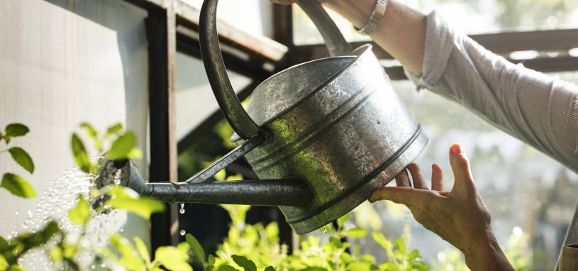 person watering plants with a watering can