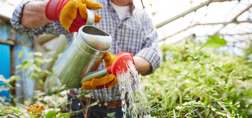 worker watering plants in garden nursery