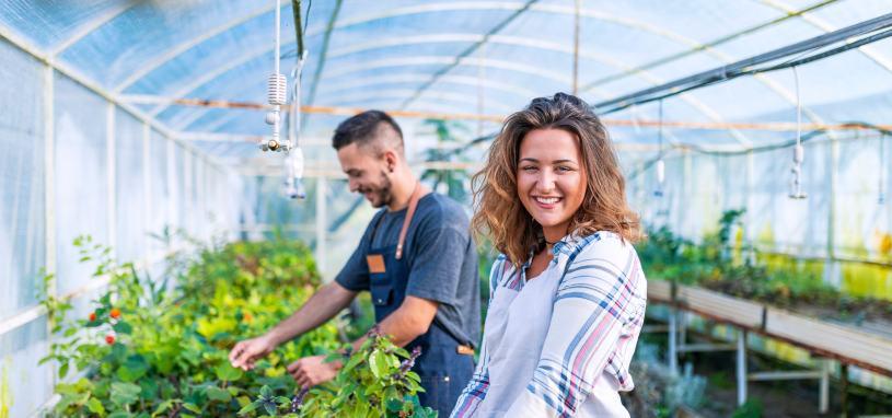 workers tending to plants in plant nursery