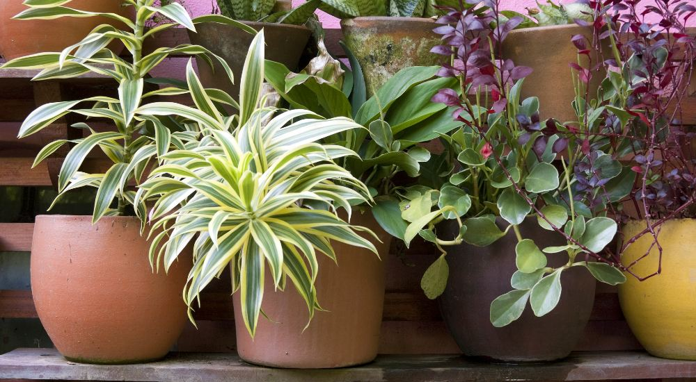 Keep potted plants alive