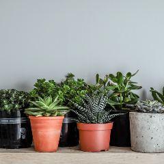 [Garden Pots] Indoor plant pots